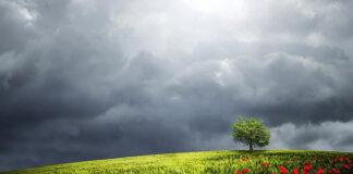 Poradź sobie z inwazją powoju polnego na Twojej uprawie